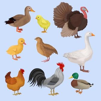Illustrazione di allevamento di pollame su uno sfondo bianco.