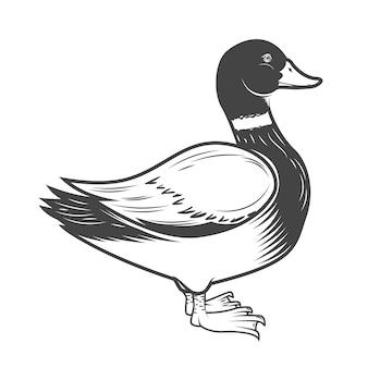 Illustrazione di anatra selvatica su sfondo bianco. elemento per logo, etichetta, emblema, segno. illustrazione