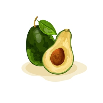 Illustrazione di avocado