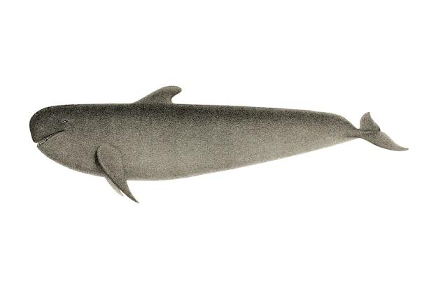 Illustrazione di balene d'epoca