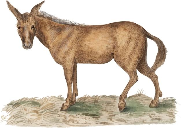 Illustrazione di cavallo d'epoca