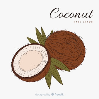 Illustrazione di cocco disegnati a mano