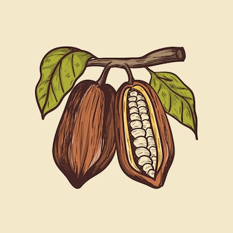 Illustrazione di disegno a mano di cacao
