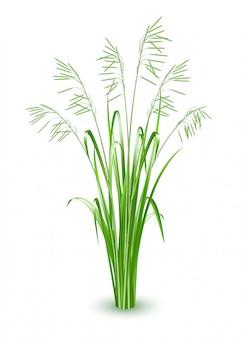 Illustrazione di erba verde