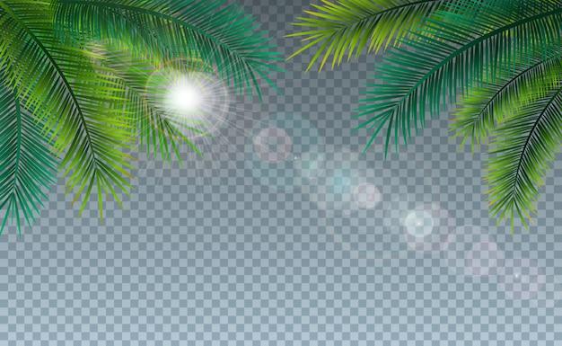 Illustrazione di estate con le foglie di palma tropicali su trasparente