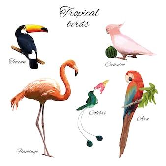 Illustrazione di fauna esotica colorata con diversi bellissimi uccelli tropicali su bianco
