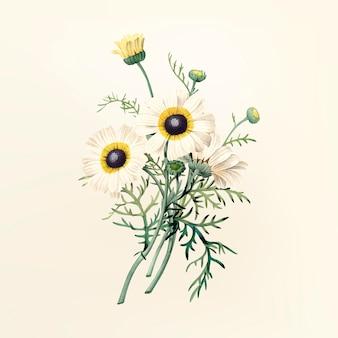Illustrazione di fiori d'epoca