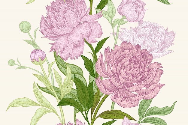 Illustrazione di fiori di peonia
