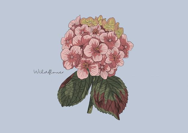 Illustrazione di fiori selvatici