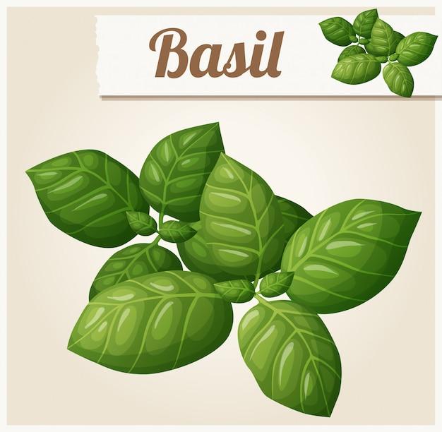 Illustrazione di foglie di basilico
