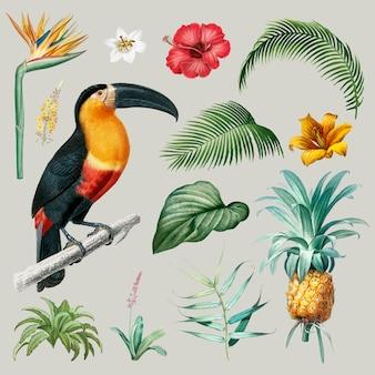 Illustrazione di foglie di macaw