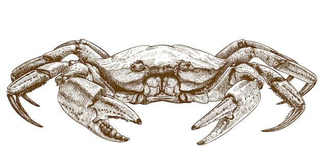 Illustrazione di incisione del granchio