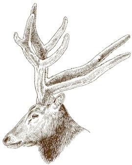 Illustrazione di incisione della grande testa di cervo