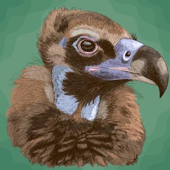 Illustrazione di incisione di avvoltoio cinereo