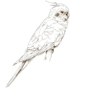 Illustrazione di incisione di cockatiel