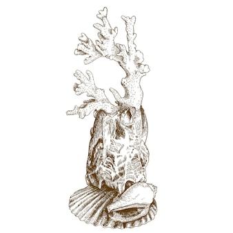 Illustrazione di incisione di corallo e conchiglia