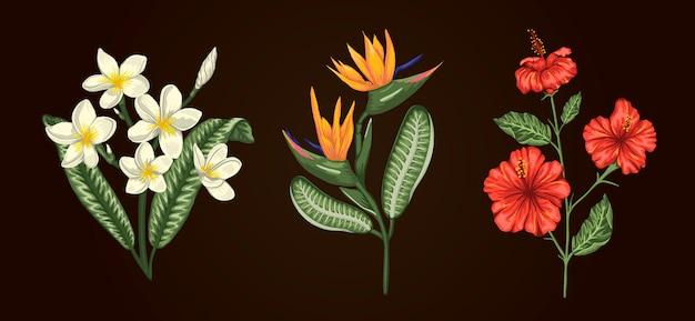 Illustrazione di mazzi di fiori tropicali isolati. ibisco realistico brillante, strelitzia, plumeria. elementi di design floreale tropicale.