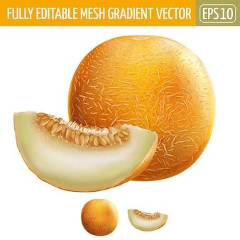 Illustrazione di melone su bianco