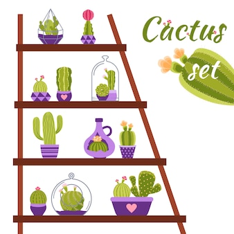 Illustrazione di mensola di cactus