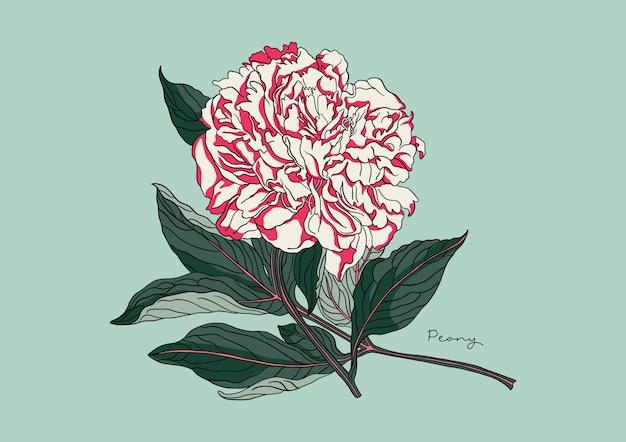 Illustrazione di peonia floreale