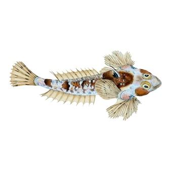 Illustrazione di pesce d'epoca