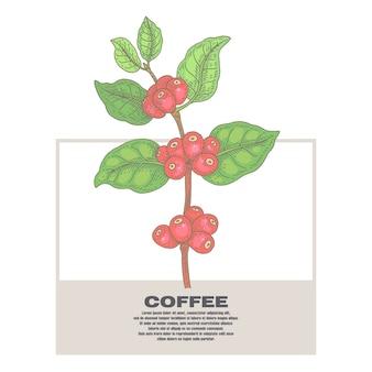 Illustrazione di piante di caffè.