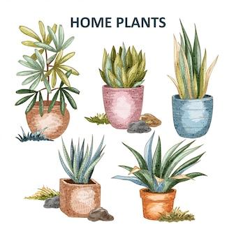 Illustrazione di piante domestiche