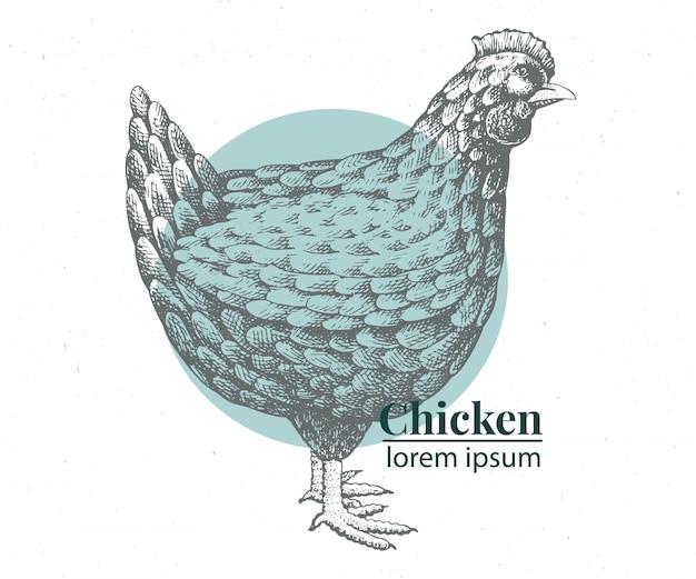 Illustrazione di pollo disegnato a mano di vettore.