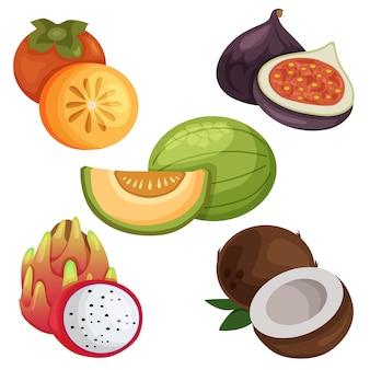 Illustrazione di set di elementi di frutta esotica