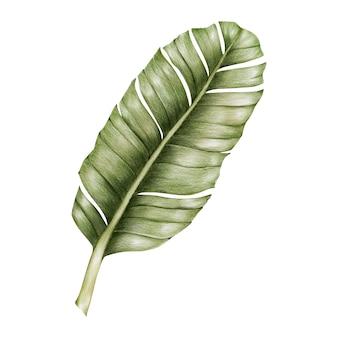 Illustrazione di stile acquerello foglia verde