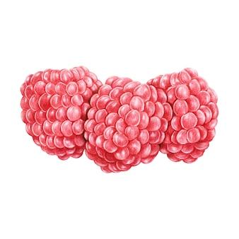 Illustrazione di stile acquerello frutta