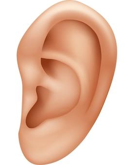 Illustrazione di un orecchio umano isolato su sfondo bianco