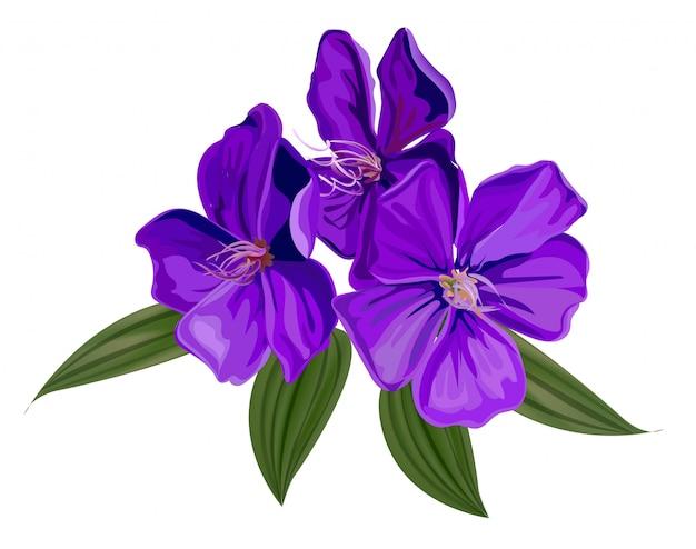 Illustrazione di vettore del fiore del cespuglio di gloria