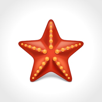 Illustrazione di vettore delle stelle marine della stella del mar rosso isolata