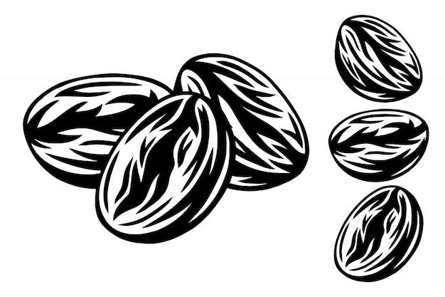 Illustrazione di vettore isolata retro chicchi di caffè arrostiti d'annata