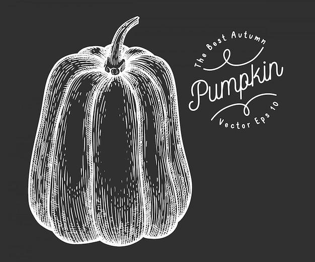 Illustrazione di zucca illustrazione di verdure di vettore disegnato a mano sul bordo di gesso. simbolo di halloween o del giorno del ringraziamento in stile inciso. illustrazione di cibo vintage
