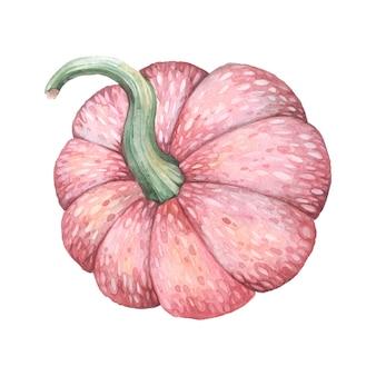 Illustrazione di zucca rosa