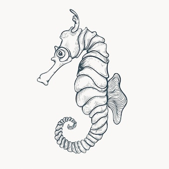 Illustrazione disegnata a mano cavalluccio marino