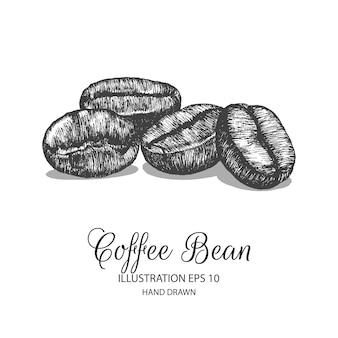 Illustrazione disegnata a mano del chicco di caffè