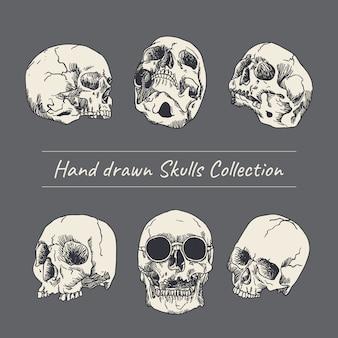 Illustrazione disegnata a mano del cranio