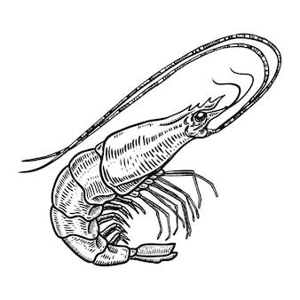 Illustrazione disegnata a mano del gamberetto su fondo bianco. frutti di mare. elemento per poster, carta, menu, emblema. immagine
