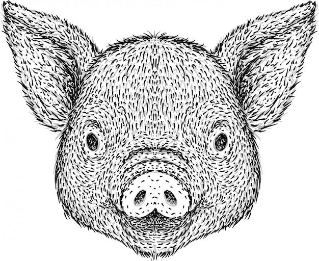 Illustrazione disegnata a mano della testa di maiale