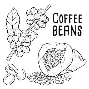 Illustrazione disegnata a mano di chicchi di caffè.