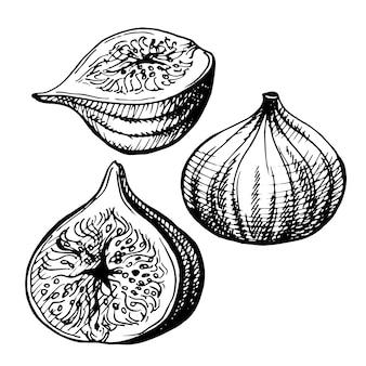 Illustrazione disegnata a mano di fichi.