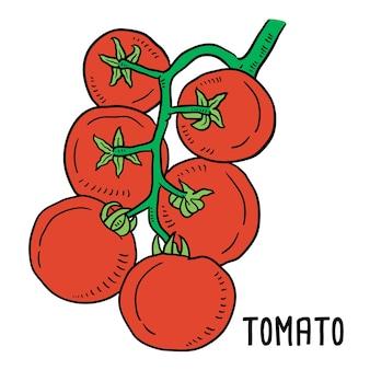 Illustrazione disegnata a mano di pomodoro.
