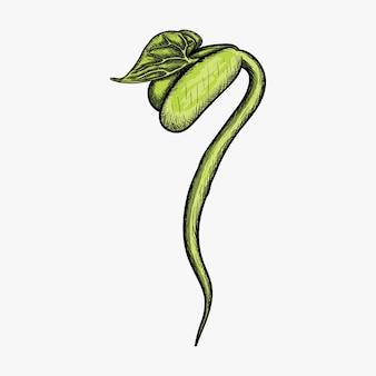 Illustrazione disegnata a mano di progettazione di logo del germoglio