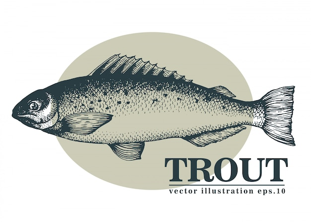 Illustrazione disegnata a mano di vettore del pesce della trota