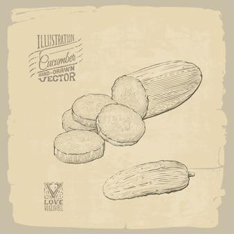 Illustrazione disegnata a mano di vettore di cetriolo