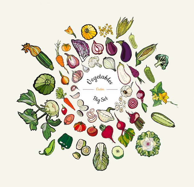 Illustrazione disegnata a mano isolata verdura. vector grande set di verdure colorate disegnati a mano hipster per poster vegetariano