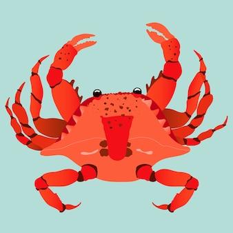 Illustrazione disegnata a mano moderna del granchio rosso. alla moda su uno sfondo verde pastello. granchio rosso vibrante vista dall'alto verso il basso. concetto di frutti di mare e crostacei.